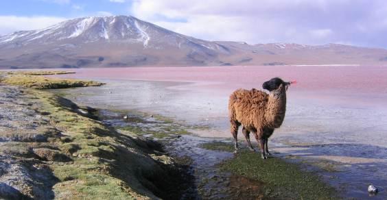 natura_in_bolivia