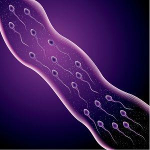vasalgel contraccezione