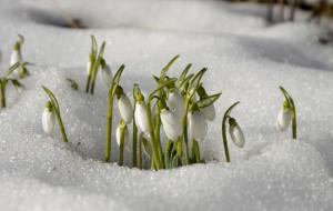 riposo invernale