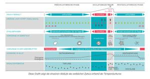 Tabelle_Zyklus_DE