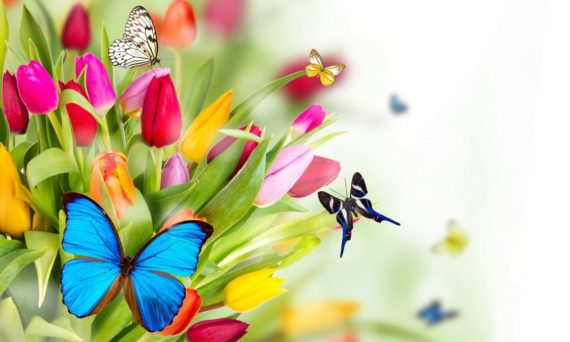 spring-flowers-024
